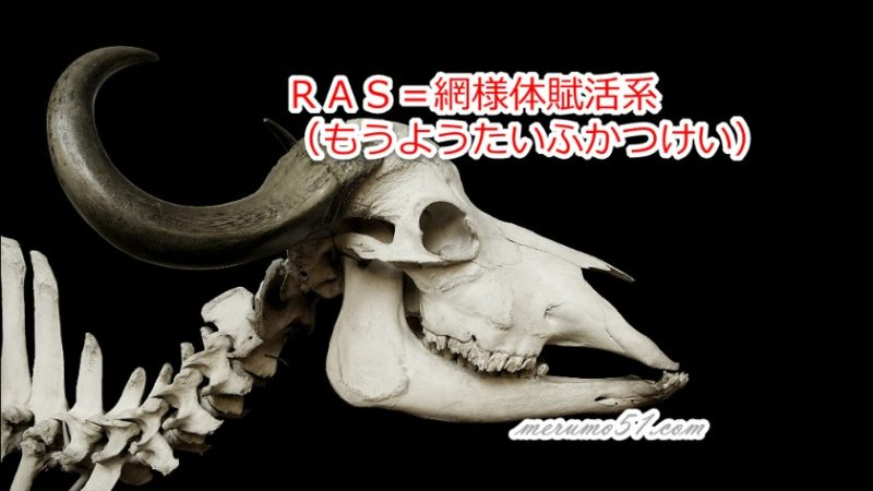 RAS=網様体賦活系(もうようたいふかつけい)